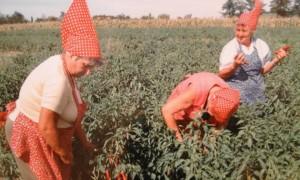 paprika pepper farmers