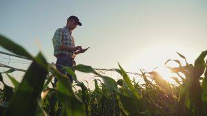 Farmer and his corn