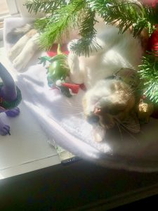 Jinkies Loves the Christmas Tree