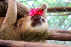 A cute sloth with a cute pink flower