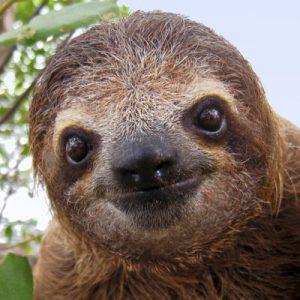 Cute Brown Slothy Sloth